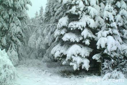 snowy-trees